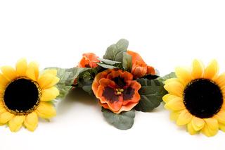 Stiefmütterchen mit Sonnenblume