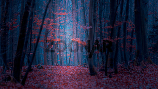 Magical fairy tale forest with fallen leaves in autumn