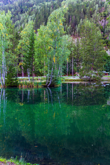 Reflects the bright green of the forest