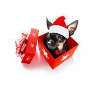 santa claus dog on christmas holidays