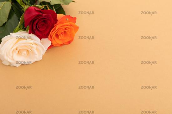 White, red and orange roses on orange background