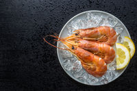 Boiled tiger prawns with ice on plate. Tasty shrimps.