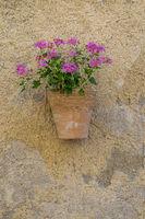 Blumenschmuck, Provence