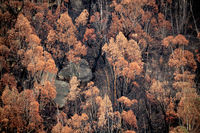 Looking down onto burnt bush land after bush fires Australia