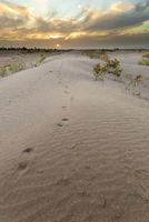 Sunset at the gates of the Sahara desert.