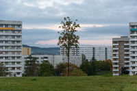 Single tree surrounded by several apartment buildings