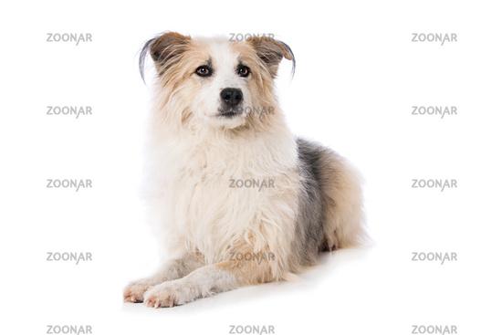 Cute dog lying on white background