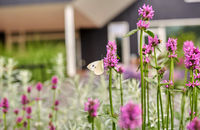butterfly on flowers blooming in summer garden
