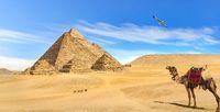 Camel looking at pyramids
