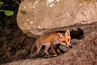jung fox