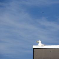 gulls nest