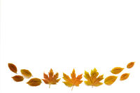 Colorful Autumn Leaves With Copy Space, Isolated Background