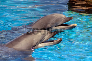 Two dolphin closeup