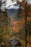 Autumn in the enchanted forest