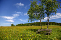lonely bench in a spring meadow