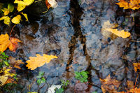 Autumn yellow leaves floating in the cold water of the spring