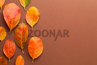 Autumn Minimal Background With Orange Leaves