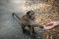 Ladies giving the food to the monkey