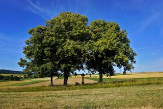 Feldkreuz unter einer Baumgruppe