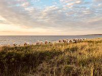 Beach chairs at the German Baltic Sea coast