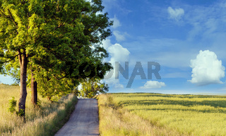 rural path with trees next to meadows