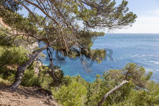 Küste mit mediterraner Flora, Mallorca