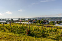 Reichenau Island, view over the vineyards to Lake Constance, Baden-Wuerttemberg, Germany