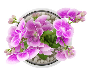 top view of purple orchid flower in glass vase isolated on white background
