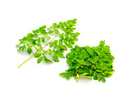 Young fresh leaves of Moringa drumstick with water drops isolated on white background
