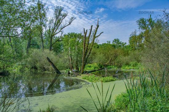 Urdenbacher Kaempe Nature Reserve,Duesseldorf,Germany
