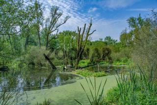 Urdenbacher Kaempe Naturschutzgebiet,Duesseldorf,NRW,Deutschland