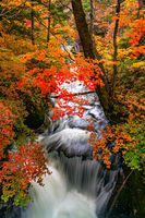 Beautiful autumn forest with the colorful foliage