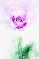 Flower lavender tulip. Stylization in watercolor drawing.