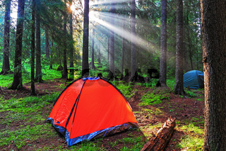 Sunrise in the forest, West Rhodope mountains, Bulgaria