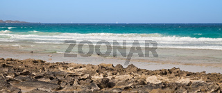 beach with rocks and seagulls