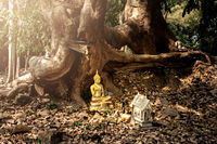 Buddhist statue at the root of a tree