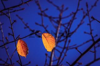 Zwei Blätter als Symbol für den Herbst des Lebens