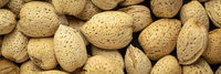 almond nuts closeup background
