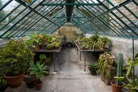 old botanical grow house with cactus