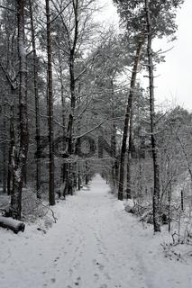 winter met sneeuw op de veluwe