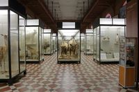 Zoological Museum named after Lomonosov. Moscow, Russia