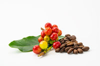 Bunch of arabica coffee fruit with green leaf and pile of roasted coffee beans on white background.