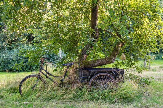 Historic bicycle on a romantic meadow orchard, Mecklenburg-Vorpommern, Germany