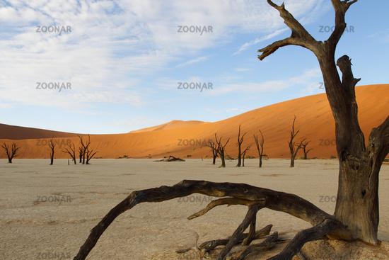 Dead Vlei, Sossulvlei, Namibia