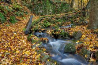 Herbstimpression aus dem Harz kleiner Wanderweg mit Bachlauf