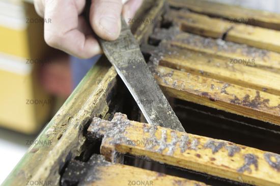 Bee honey production