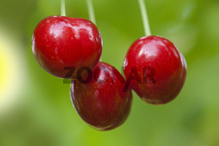 three cherries on green blur