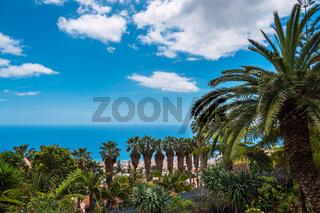 Blick auf Palmen in Funchal auf der Insel Madeira, Portugal