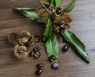 Chestnuts on the table