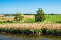 Landschaft am Prerowstrom auf dem Fischland-Darß